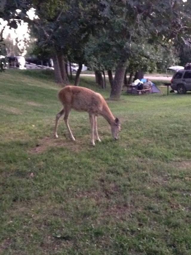 deer 2.jpg