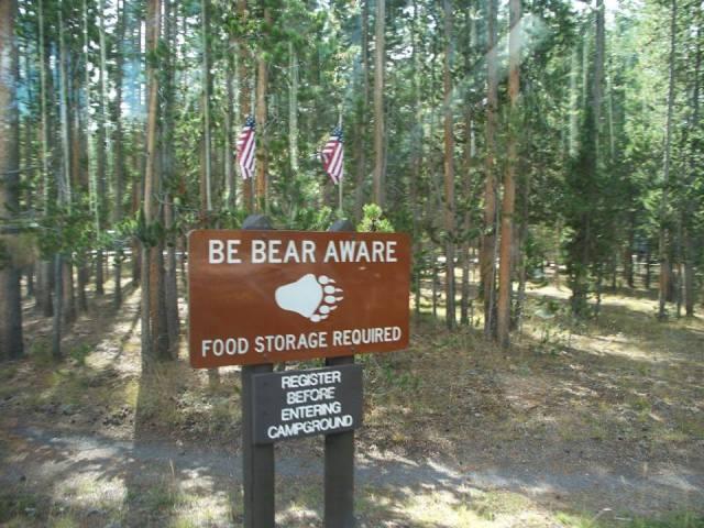 bear aware.jpg